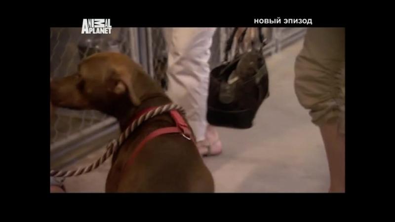 Д/С На свободу с питбулем 13 серия (2010г)