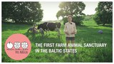 THREE LITTLE PIGS - The First Farm Animal Sanctuary in the Baltic States