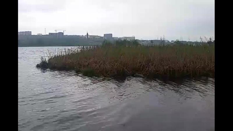 таинственный остров на пруду.