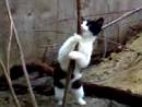 Кот стриптизер