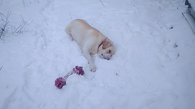 Любишь ли ты снег, как любит его Брайн?!
