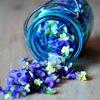 MAGICWORLD | Флора и фауна | Весна