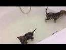 Волчата купаются, волки в ванне, домашний серый волк, волченок дома