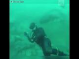 Акула чуть не откусила голову водолазу