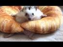 Ежик в круассане / The Pet Collective