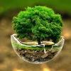 """Курс """"Экология для всех"""""""