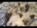 Кошки смешные видео про кошек и котов 2018 28 Коты и котики Без монтажа