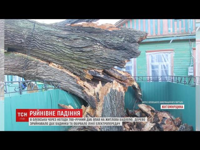 700-річний дуб впав на житловий будинок через буревій на Житомирщині