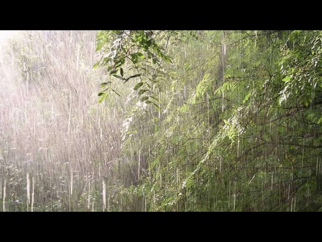 Звуки природы. Живой лес,от страха, стресса, агрессии. У вас психоактивная программа.