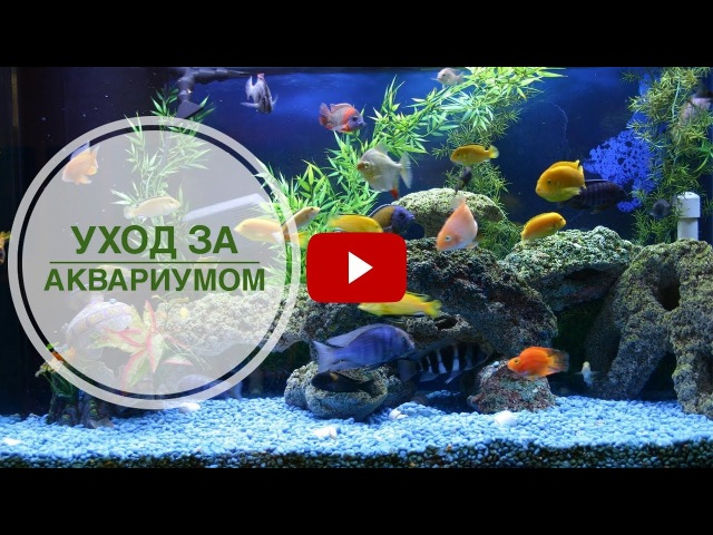 Мутная вода в аквариуме? ➡ Эксперт hitsadTV поможет