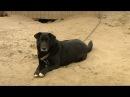 Друг семьи. «Дружелюбная собака Грета ищет дом»