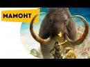 Самые интересные факты про невероятных вымерших животных для детей   Про мамонтов