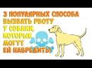 3 популярных способа вызвать рвоту у собаки которые могут ей навредить