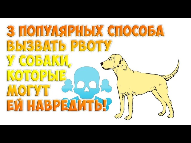 3 популярных способа вызвать рвоту у собаки, которые могут ей навредить