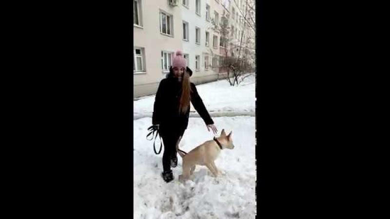 Даша Волкова на прогулке с Жёлтым волком.зима 2018 г.