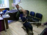D.Fatin Training of a dog, attack on a table
