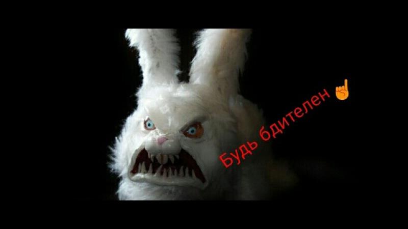 Жесть! Смотреть всем! Зверское нападение кроликов-зомби на человека!