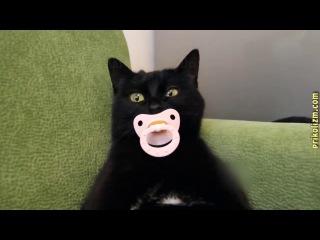 Приколы с кошками и котами #4 Подборка смешных и интересных видео с котиками и ко...