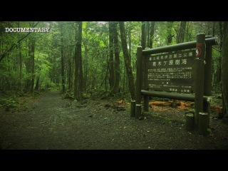 The Haunted Suicide Forest   Japan's Darkest Location   Aokigahara Documentary