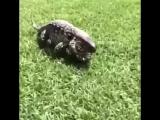 Этот ящер помогает прийти в себя