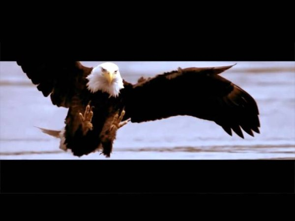 EAGLE STORY The Motivational Story of Change