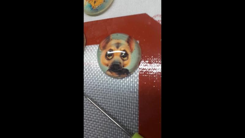 Собака-наблюдака