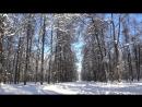 В Тимирязевском лесопарке 12.02.2018 год Москва Видео № 1