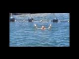 Куба 2017 - Плавание с дельфинами))