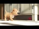 отличный подарок .самый короткий фильм который получил оскар , мультик мальчик и собака