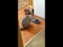Самая культурная кошка в мире