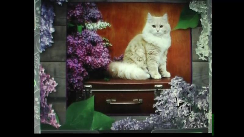 Вспомним ВЕСНУ , цветущую сирень ..и ..- ролик Бориса Титова