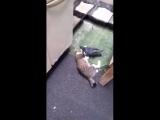 Adoro gatos (felinos) Public Group (1)