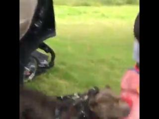 Собаки-охраняки