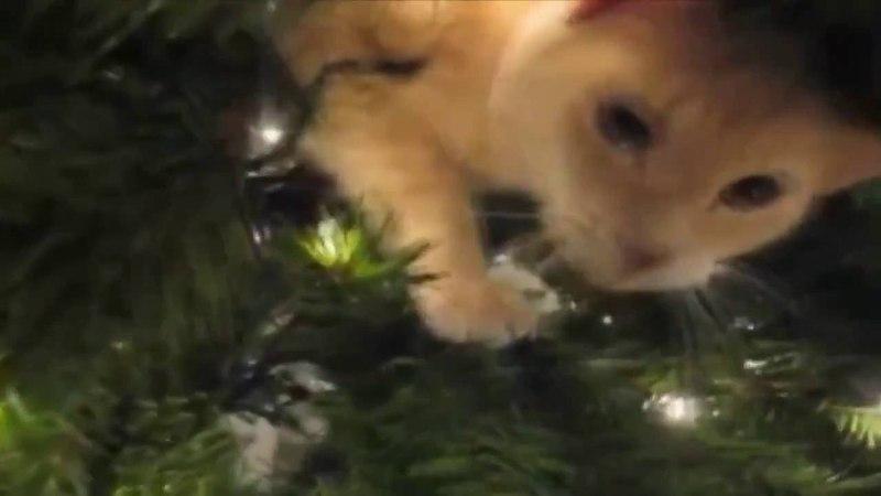 Кошки нападают на ёлки! Прикол!