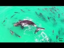 Whale Vs. Dolphin Pack