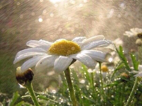 «Лето — это поцелуй солнечного зайчика, соленый бриз моря, клубника и много-много солнца.»  8PB2I1O2oew