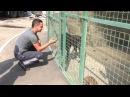Нашелся хозяин потеряшки курцхаарши Месяц собака ждала его в харьковском горо
