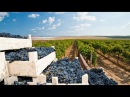 Сучасний стан та перспективи розвитку виноградарства і садівництва в Україні