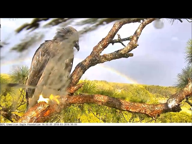 AEF-NEFL Eagle Nest Cam 3-20-18 Sky and the Rainbow!