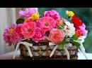 Красивое поздравление Женщин с праздником Весны 8 Марта