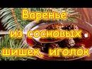 Варенье из сосновых шишек, иголок и меда. Без термообработки. (07.17г.) Семья Бровченко.