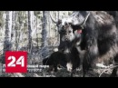Таяние вечной мерзлоты. Документальный фильм Анны Афанасьевой