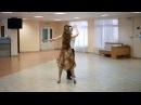 Большой фигурный вальс| Схема танца | The big figured waltz