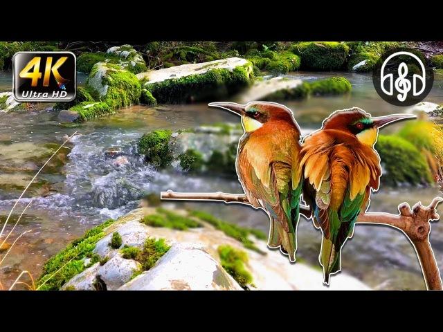 Лечебные Звуки Природы, Пение Птиц, Шум Лесного Ручья