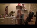 Дацик водит Голых проституток и их клиентов по улице 18 Флешмоб
