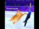 Fat Cat Art on Instagram Zarathustra the Figure Skating Cat is the Olympics champion!