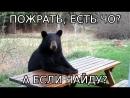 В горах ВКО появился медведь-беспредельщик отнимающий еду у отдыхающих.