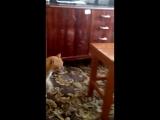 Кот не дурак
