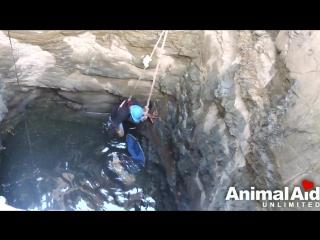 Спасение собаки упавшей в колодец