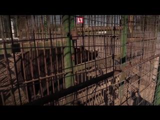 Медведь 15 лет живет в клетке